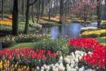 Blossom Creek