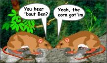 Rats Talk GMO